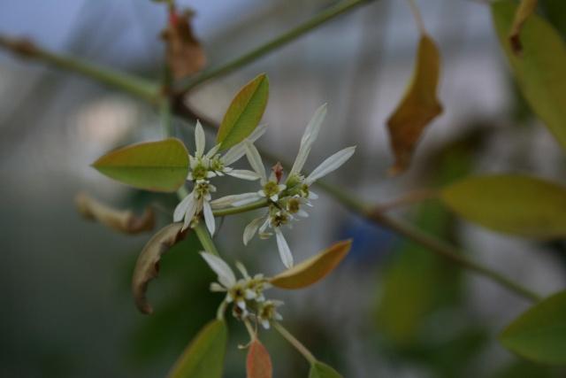 Fleurs au 1er janvier dans mon jardin Euphor13