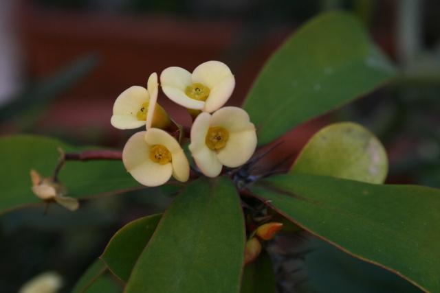 Fleurs au 1er janvier dans mon jardin Euphor16
