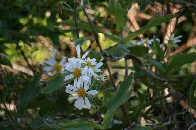 Fleurs au 1er janvier dans mon jardin Montan10