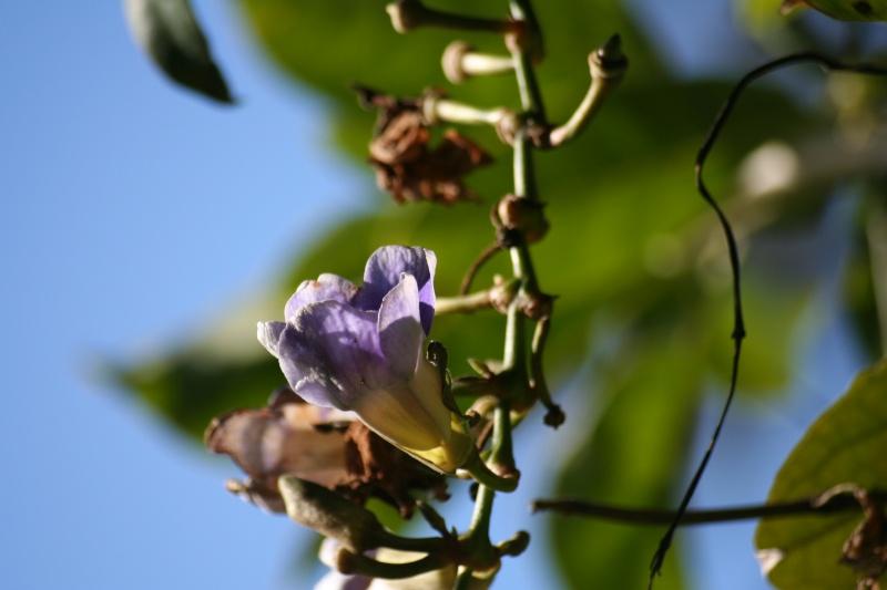 Fleurs au 1er janvier dans mon jardin Thunbe10