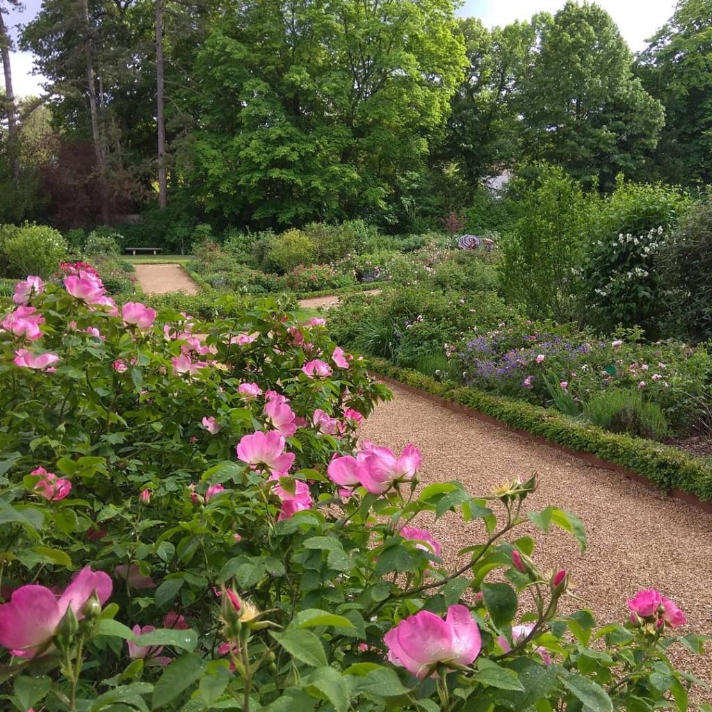 Visite de la roseraie de la Malmaison - Page 3 Img_2275