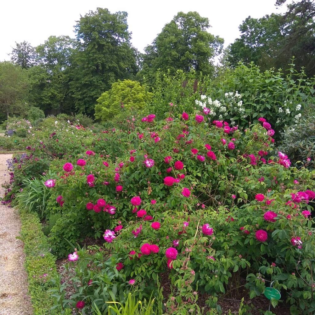Visite de la roseraie de la Malmaison - Page 3 Img_2276