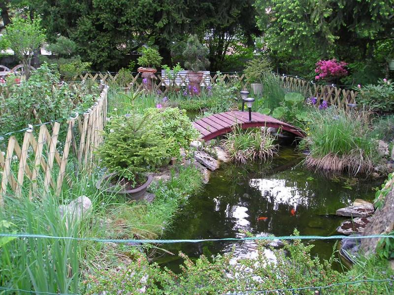 mon bassin et ses grenouilles Bassin11