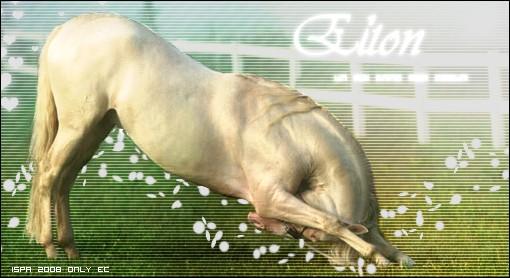 Signature + Avatar Elton_10