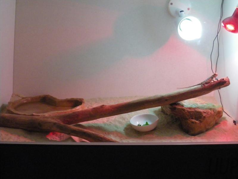 le terrarium de Bendigo Imgp0413