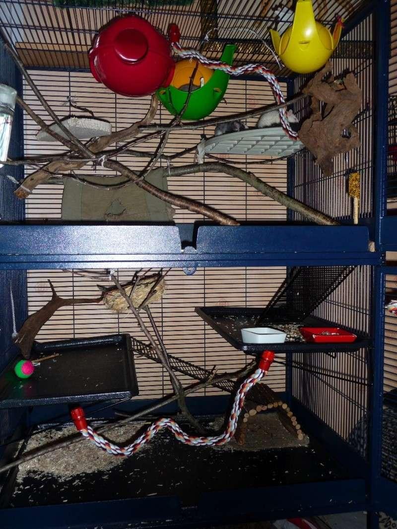 Photos de vos cages P1130510