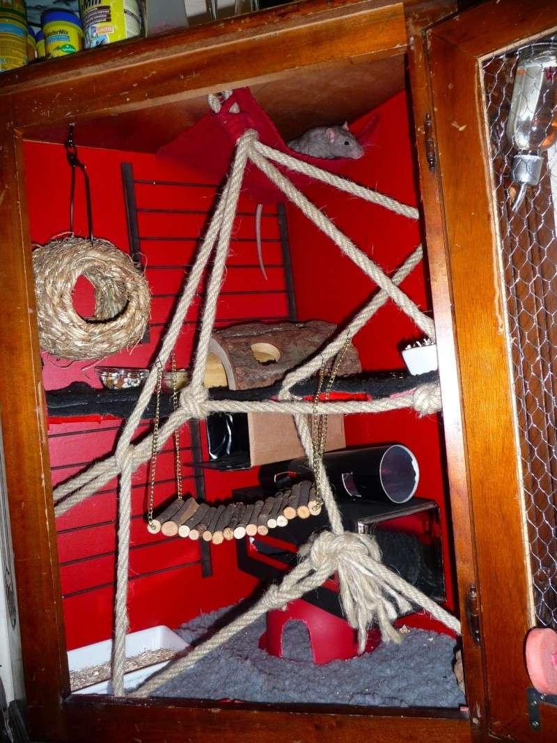Photos de vos cages P1130610