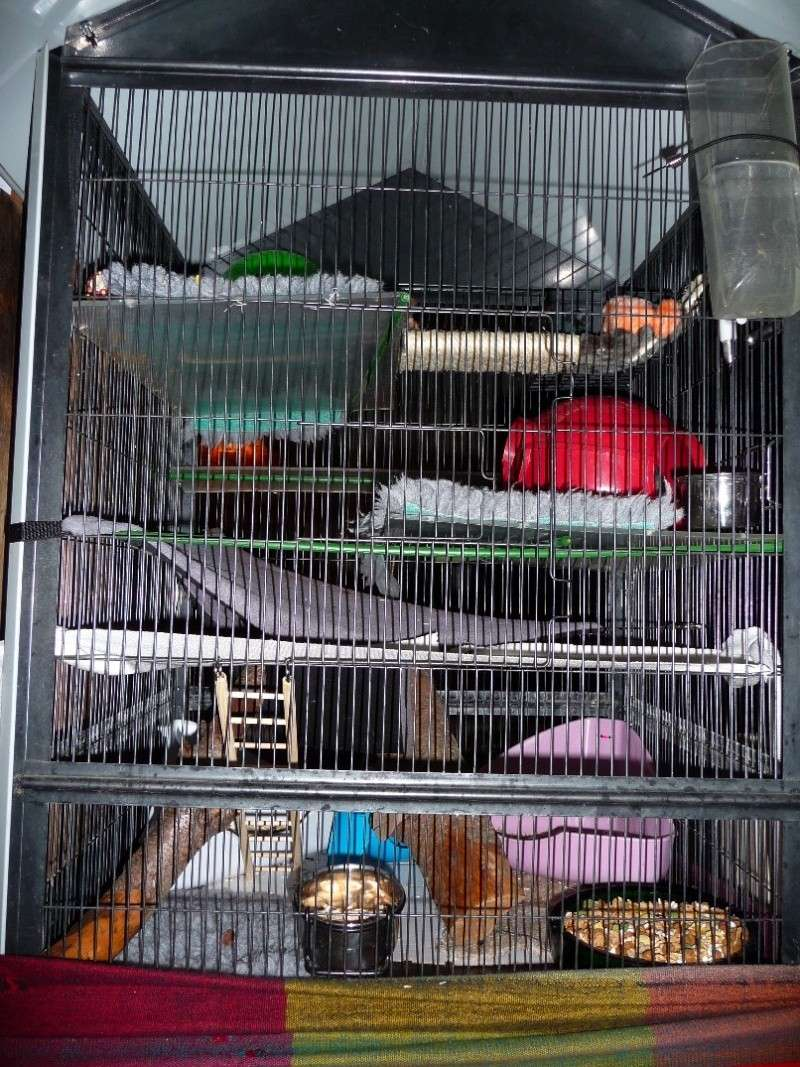 Photos de vos cages P1140210