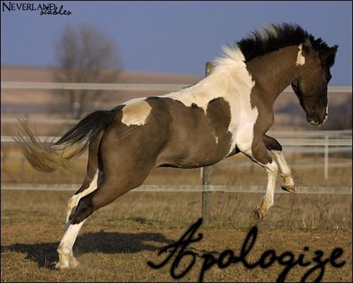 [ Apologize - Poney - 10 ans ] Apolog11