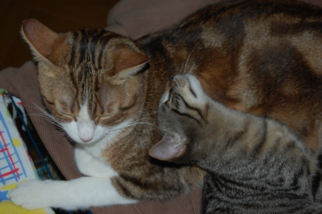 4 chatons (Mélisse, Vanille, Cacao, Saphran) Dsc_0014