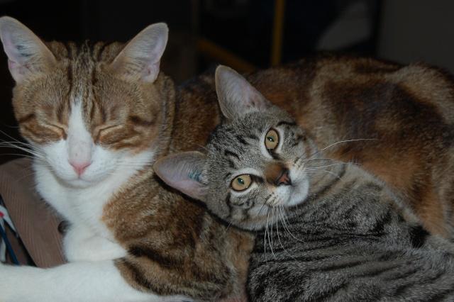 4 chatons (Mélisse, Vanille, Cacao, Saphran) Dsc_0018