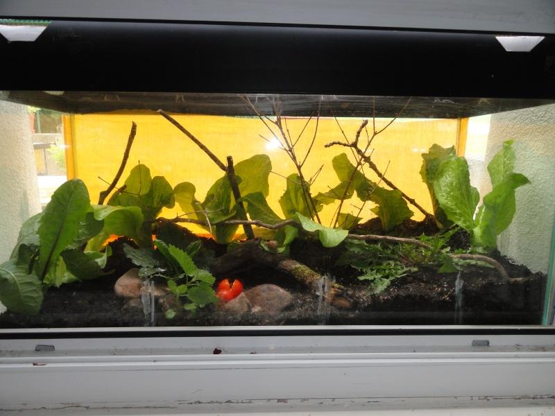 identification escargots Dsc03111