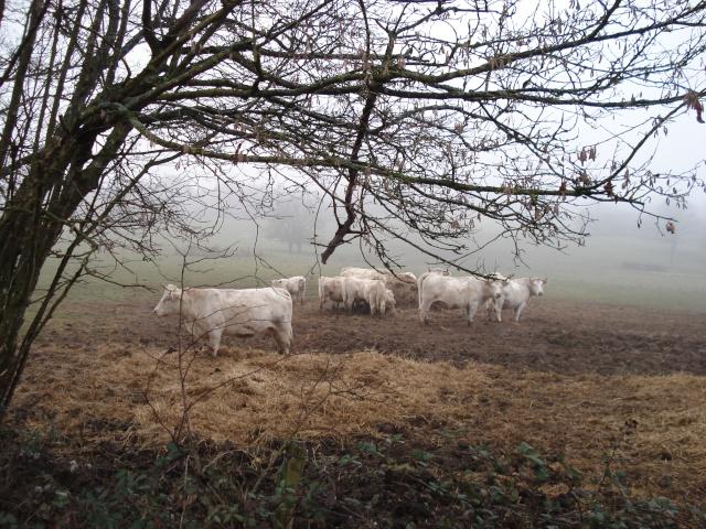 ballade hivernale en Puisaye Puisay18