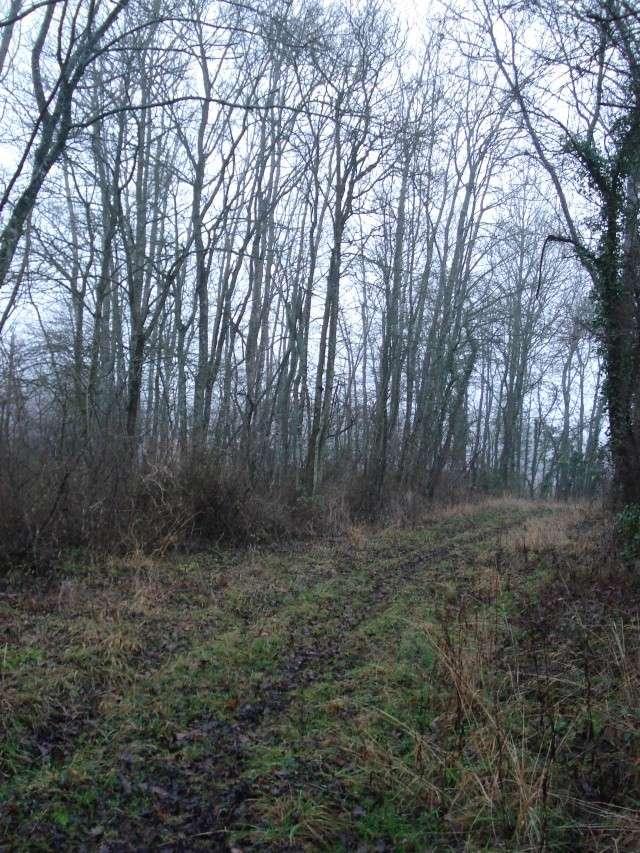 ballade hivernale en Puisaye Puisay30