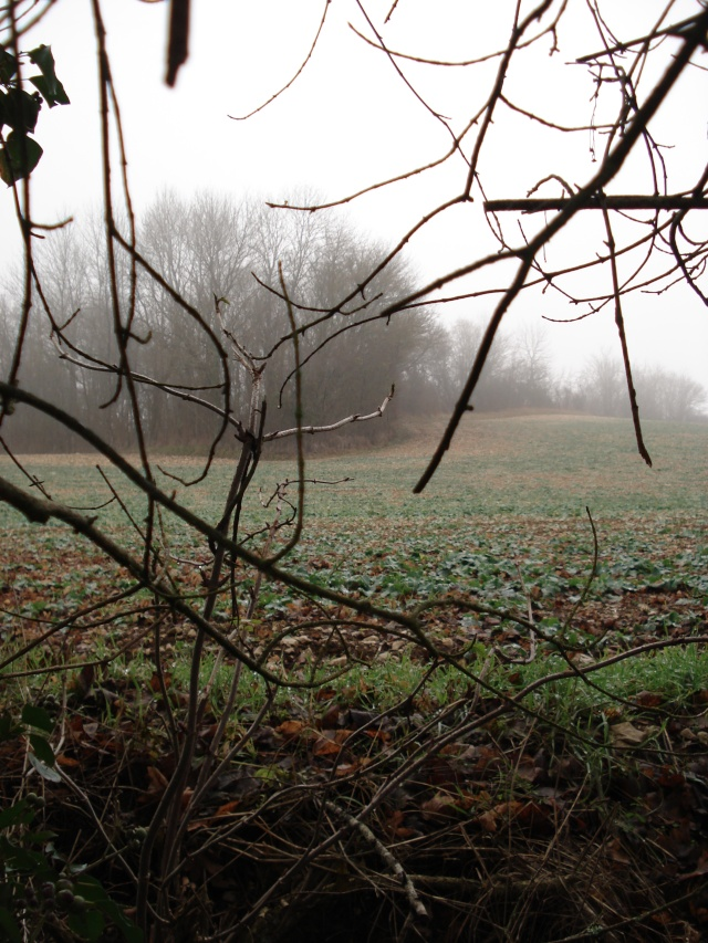 ballade hivernale en Puisaye Puisay31