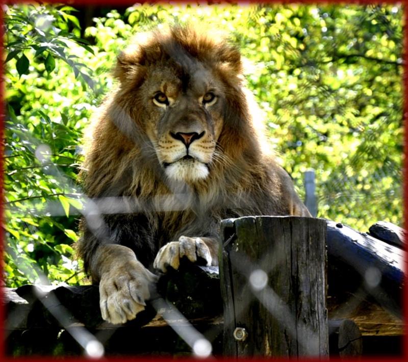 un zoo en haute savoie! _dsc0111