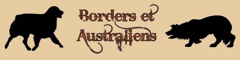 Border Collie et Berger Australien Forum