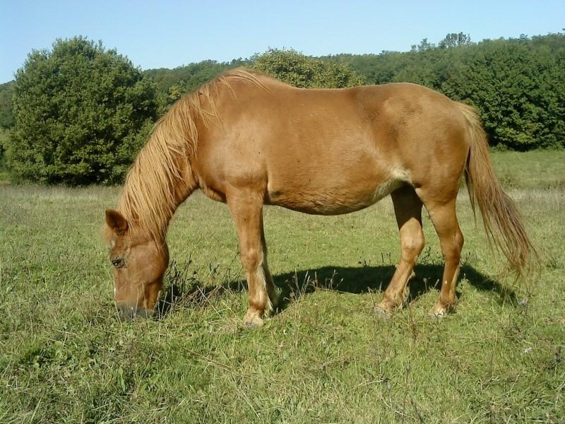 QUETZAL - ONC poney née en 1982 - adoptée en janvier 2011 par Mélanie Dsc08110