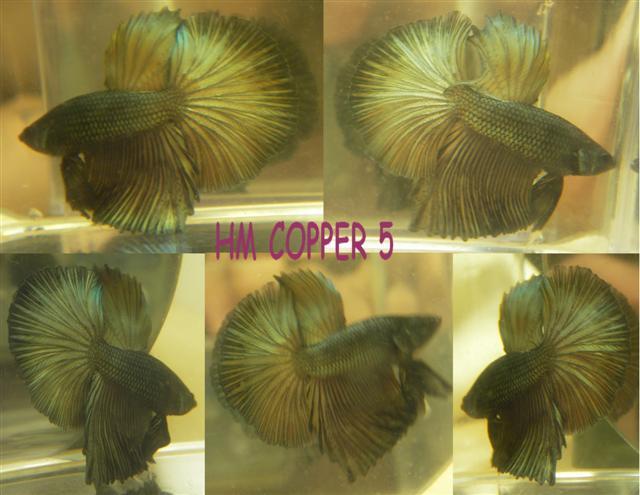 Plakats et voiles longs copper Collag12