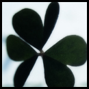 Shield's Factory Clover10