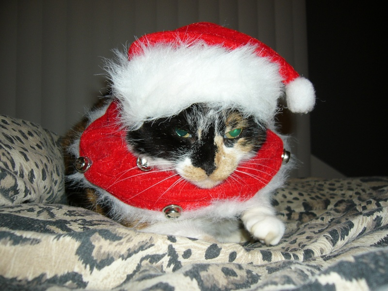 Noël 2007 pour Mika Mulan_10