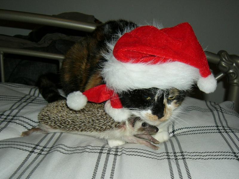Noël 2007 pour Mika Pictur12