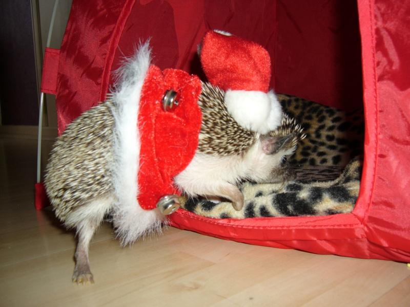 Noël 2007 pour Mika Pictur14