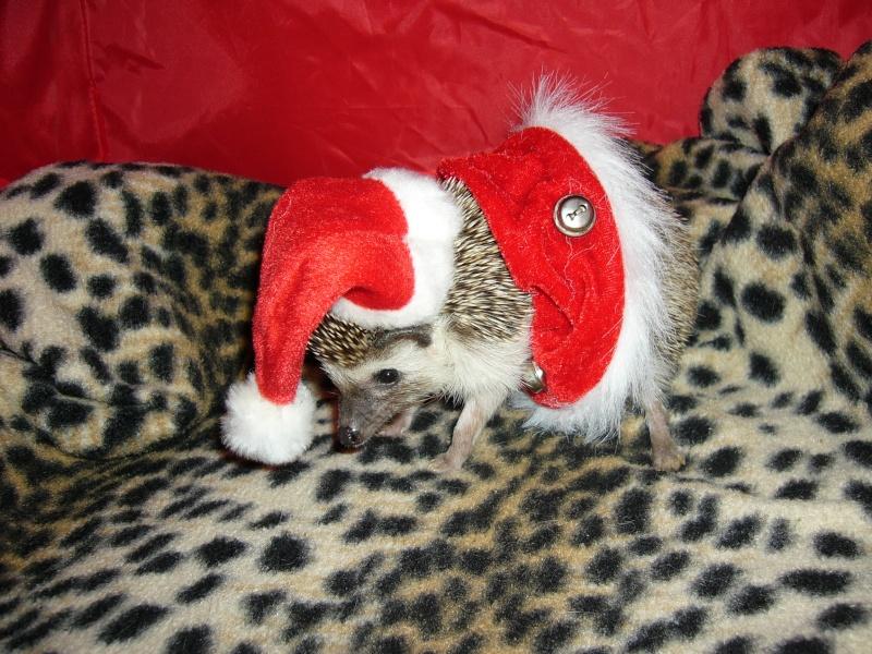 Noël 2007 pour Mika Pictur15