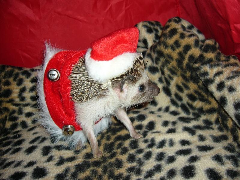 Noël 2007 pour Mika Pictur16