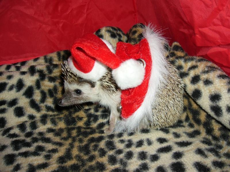 Noël 2007 pour Mika Pictur17
