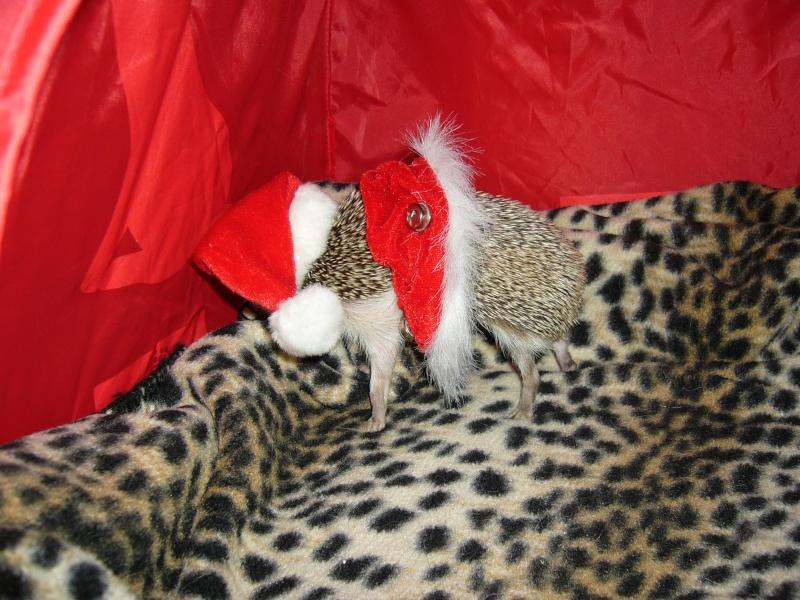 Noël 2007 pour Mika Pictur18