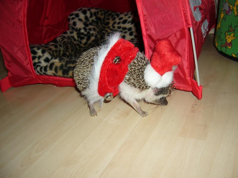 Noël 2007 pour Mika Pictur20