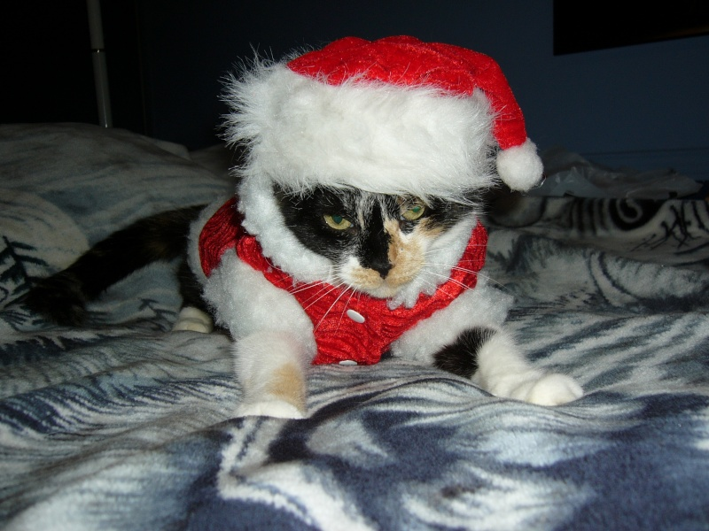 Noël 2007 pour Mika Pictur21