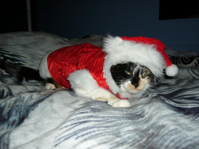 Noël 2007 pour Mika Pictur22
