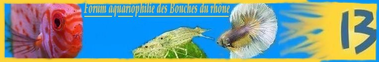 aquariophilie bouche du rhone