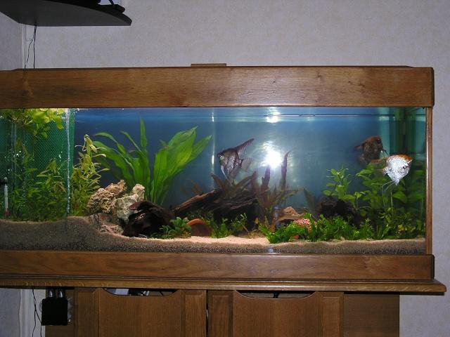 (77) Vds Bel Aquarium P1010010