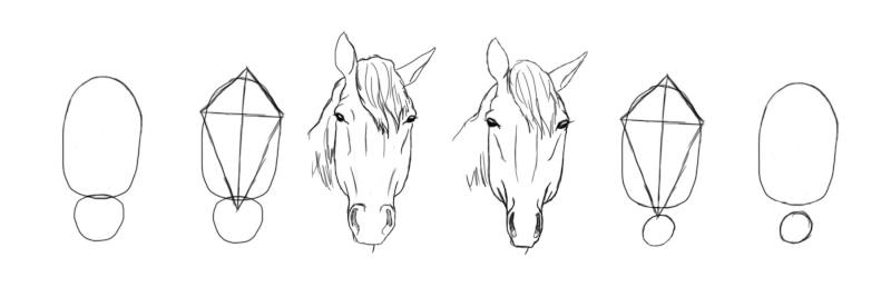 cheval - [Dessin] Dessiner le cheval en détail Facefi10