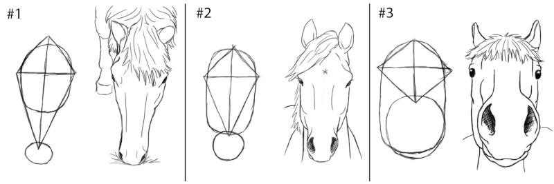 cheval - [Dessin] Dessiner le cheval en détail Facein10