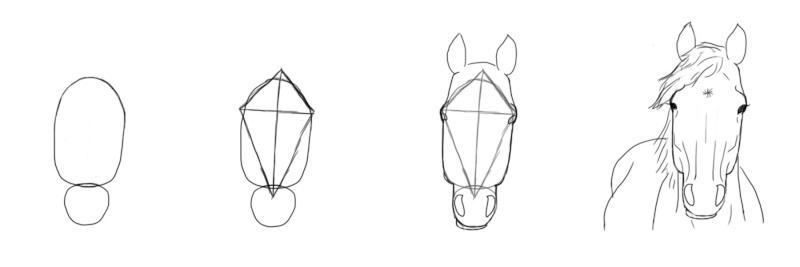 dessin cheval de face