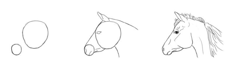 cheval - [Dessin] Dessiner le cheval en détail Tatepr10