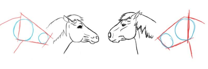 cheval - [Dessin] Dessiner le cheval en détail Tatepr11