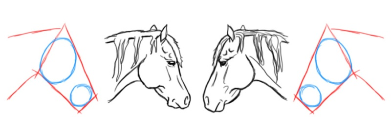 cheval - [Dessin] Dessiner le cheval en détail Tatepr12