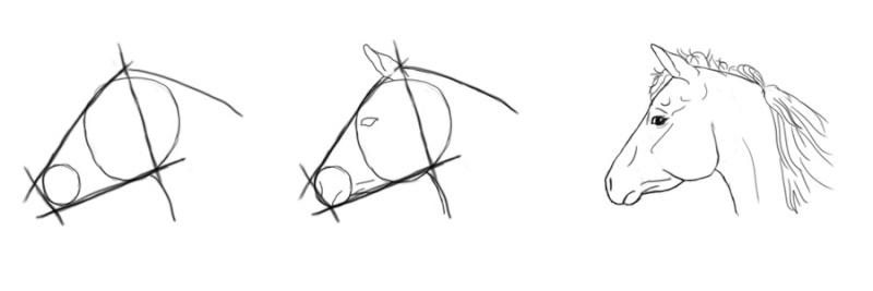 cheval - [Dessin] Dessiner le cheval en détail Tetepr10