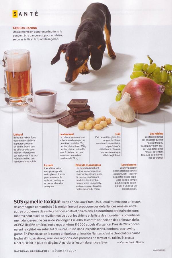 Aliments toxiques pour les chiens Alimen11