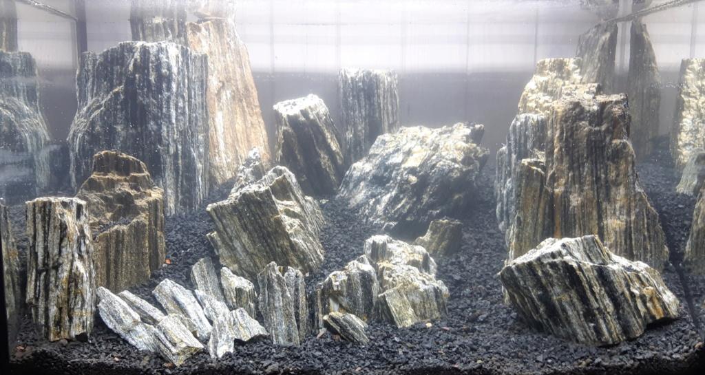 45 litres : crevettes Red Fire, pierre, mousses 20190310
