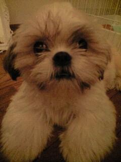 Le chien de Mikaru Img20010