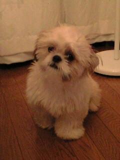 Le chien de Mikaru Img20012