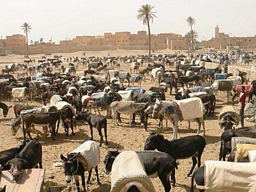 Voyage par la photo Agadir10