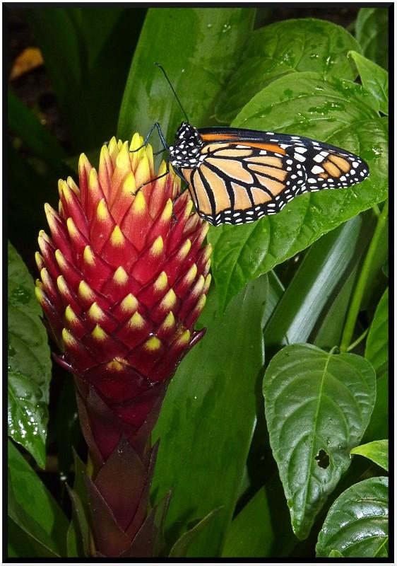 Serre au papillons P1090313
