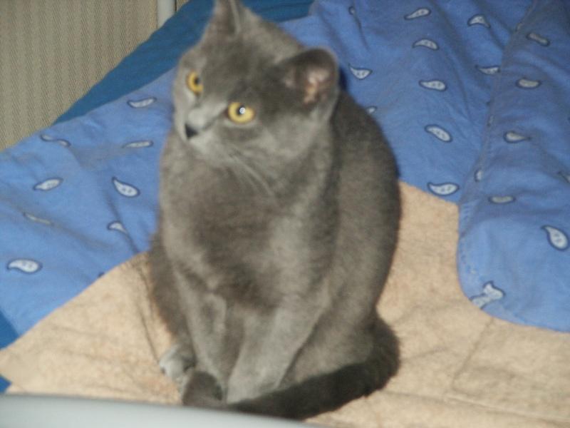 Phébé 8 mois grise bleue Pict0410